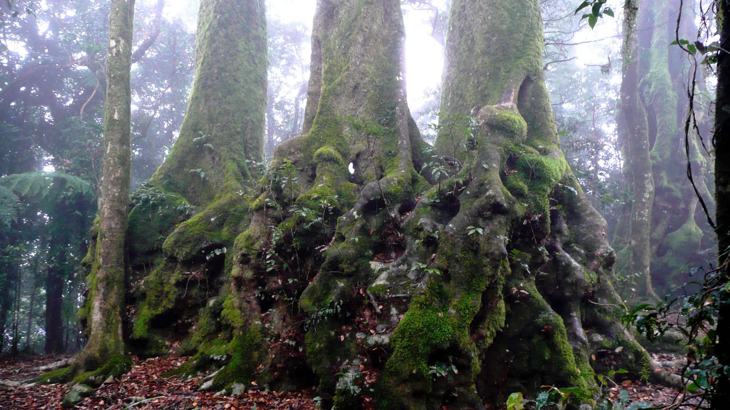 樹齢2千年 南極ブナ