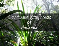 ゴンドワナ多雨林