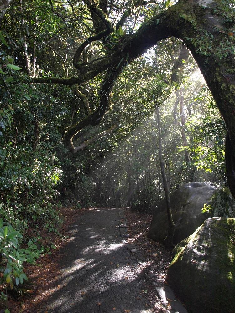 ゴンドワナ多雨林群