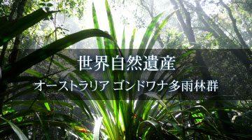 世界遺産 ゴンドワナ多雨林
